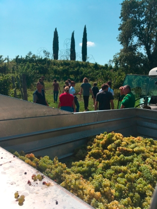 004_NOW at Vigne Museum vendemmia_credits_NOW NewOperationWave